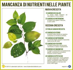 Mancanza di nutrienti nelle pante Container Gardening Vegetables, Vegetable Garden, Garden Plants, Gemüseanbau In Kübeln, Home Grown Vegetables, Green Life, Cacti And Succulents, Garden Planning, Botany