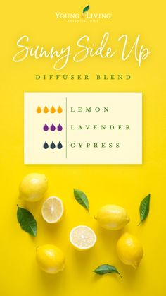 Lemon oil is one of Young Living's most popular essential oils. Discover the best Lemon essential oil uses and benefits to enhance your life. Young Essential Oils, Cypress Essential Oil, Essential Oil Scents, Essential Oil Diffuser Blends, Essential Oil Uses, Doterra Essential Oils, Yl Oils, Essential Oil Combinations, Living Oils