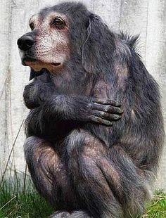 Weird+Animals | WEIRD ANIMALS: WEIRD CREATURES...POOR THEM...DON'T LAUGH!!!