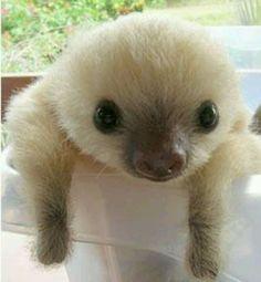 #sloth #slothhostel #slothonsie #slothmug #slothzilla #slothchild #slothkin #slothselfie #slothsoninstgram #slothjourneys #slothtribute #slothskedaddle #slothsquad #slothbear #slothdog #slothcosplay #SlothSleepp #SlothRelief #slothhostelthailand #SlothSanctuary #slothstagram #SLOTH #slothtoy #slothsareawesome #slothsofaustralia #slothday #slothandkitesurf #slothythesloth #slothsunday #slothmeme