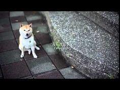 abbandonano (per finta) un cane, ecco la reazione del cucciolo!