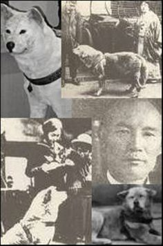pictures of hachiko the dog | REAL HACHIKO PHOTOS - HACHI, HACHIKO, TIJUANAANTITAURINO, NO MAS ...