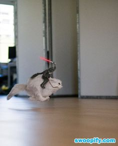 Vader On A Cat #humor #lol #funny