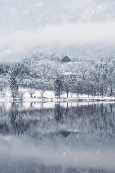 New free photo from Pexels: https://www.pexels.com/photo/forest-trees-lake-winter-9096 #snow #landscape #forest