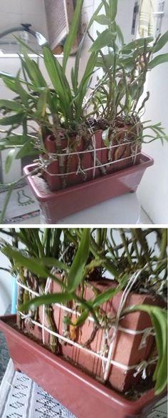 Método para salvar orquídeas com um tijolo umidecido Orchid Pot, Orchid Plants, Air Plants, Garden Plants, House Plants, Growing Orchids, Growing Plants, Orchid House, Orchid Care