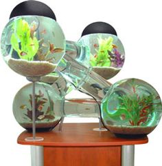 1000 images about aquariums on pinterest fish tanks for Octopus fish tank