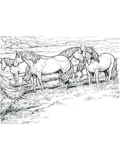 wild horse coloring pages image printable. Horses are known as runner animals, so they are often used as fast transportation in the past. This animal has long been one of the economically and h. Dover Coloring Pages, Farm Animal Coloring Pages, Fall Coloring Pages, Unicorn Coloring Pages, Printable Adult Coloring Pages, Coloring Pages For Girls, Coloring Pages To Print, Wild Horses Running, Coloring Rocks