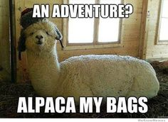 It's Alpaca Adventure Time!