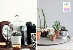 Cactus ideas for the home. Something to do with my saguaro seeds. My Home Design, Home Interior Design, Interior Styling, House Design, Cactus Flower, Humble Abode, Kitchen Remodel, Household, Diy Crafts