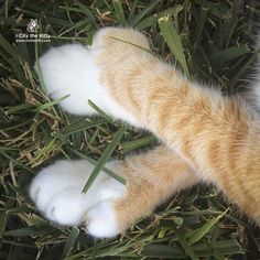 One of the best feelings ever. #barefoot #toes #grass #citythekitty #pawsneedclaws by citythekitty