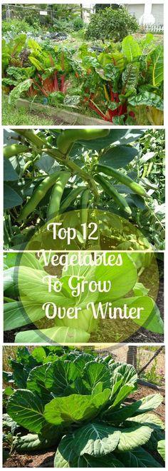12 Best Vegetables To Grow For Starting A Winter Vegetable Garden.