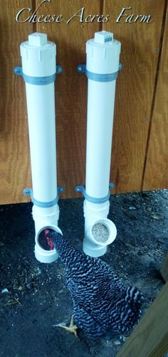 "Grit and oyster or egg shell feeder for chickens. Would also make a good regular feeder. Uses 3""PVC pipe, 3x3x3 WYE. https://www.facebook.com/CheeseAcres"
