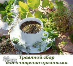 травяной сбор очищения организма от шлаков