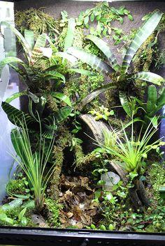 Pin by Louis MR on Terra Frog terrarium Reptile Gecko Terrarium, Aquarium Terrarium, Reptile Terrarium, Terrarium Plants, Succulent Terrarium, Vivarium, Planted Aquarium, Tropical Garden, Tropical Fish