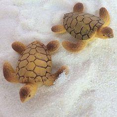 2 résine Tortues de mer miniature pour mini jardin jardin... https://www.amazon.fr/dp/B010HXSLUA/ref=cm_sw_r_pi_dp_hsuzxbN4D23P1