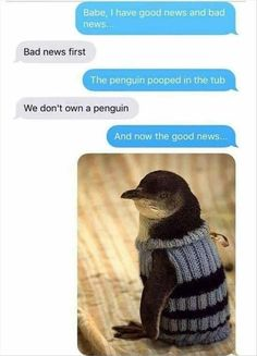10 Funny Pictures Of Today - #funnymemes #funnypictures #humor #funnytexts #funnyquotes #funnyanimals #funny #lol #haha #memes