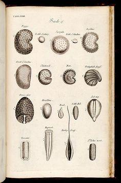 Stamens, The Anatomy of Plants, Nehemiah Grew, 1682.