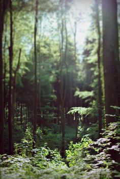 Items similar to Forest - Original Fine Art Photography - Print on Etsy