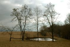 la porte rouge: the woods, a pond and the listening moon.