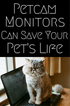 Petcam Monitors Can Save Your Pet's Life - Technology is changing the ways we interact with our pets, and how we monitor them when we are away#petcam #pets #webcam | everydayhealth.com