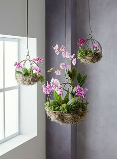 Orchid Planter Project Will Be a Conversation Starter This project can be done in an afternoon and makes it easy to show off your favorite orchid plants.This project can be done in an afternoon and makes it easy to show off your favorite orchid plants. Indoor Orchids, Orchids Garden, Indoor Plants, Indoor Gardening, Organic Gardening, How To Plant Orchids, Indoor Flowers, Patio Plants, Artificial Flowers
