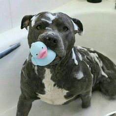 This is the best thing I've seen all day!! Wish my girl liked bath time this much!