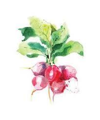 Resultado de imagen para watercolor vegetable