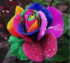 #pink #rainbow #rose #water #waterdrop