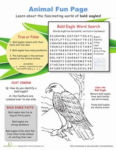 Fourth Grade Science Worksheets: All About the American Bald Eagle Science Symbols, Science Worksheets, Science Facts, Printable Worksheets, Life Science, Free Printable, Printables, Camping Activities For Kids, Science For Kids