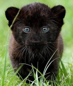 Beautiful Cub.