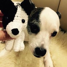 When doggie meets doggie <3 #crochet #amigurumi #dog