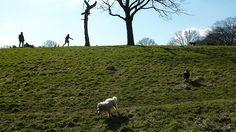 Dogs on heath