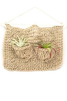 Take your air plant displays to a whole new level!