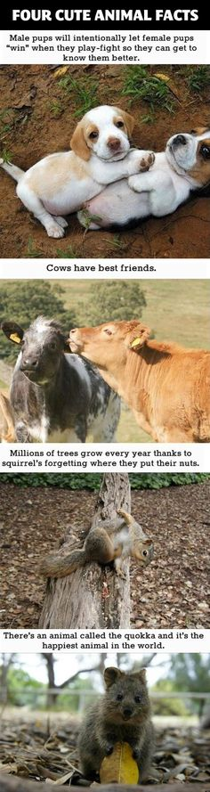 Cows have best friends. Exactly why I'm a vegetarian!
