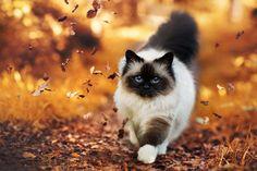 autumn path by Thunderi on DeviantArt