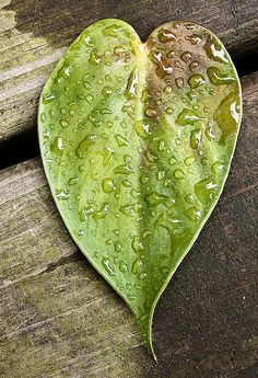 Heartshaped Leaf <3