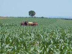 Beautiful farm lands of Pennsylvania Dutch county in Lancaster county