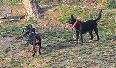 11/02/2016 - Torino con Juno e Paco