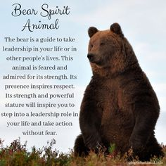 Bear Spirit Animal - - Bear Spirit Animal In the kingdom of spirit animals, the bear is emblematic of grounding forces and strength. This animal has been worshiped throughout time as a powerful totem, inspiring those who need it. Bear Spirit Animal, Spirit Bear, Animal Spirit Guides, Animal Meanings, Animal Symbolism, Bear Meaning, Bear Tattoo Meaning, Animals Tattoo, Bear Totem