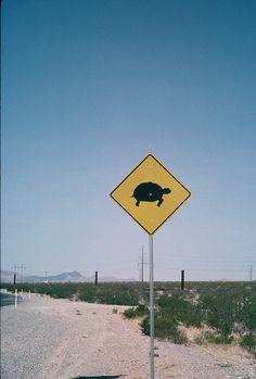 Desert tortoise crossing