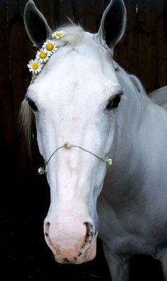 Horse flower crown ♡