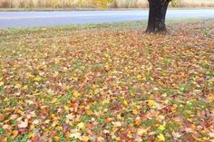 Fall Planning checklist 1-10 Leaves in Our Front Yard