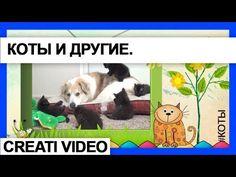 Видеоклип Коты, котята  и другие животные Серия 18. Котята. коты и други...