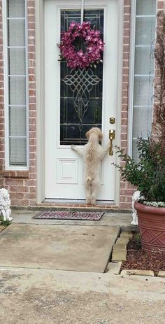 Happy Blog Humor – my dog ran away, after hours of looking I came home to this…