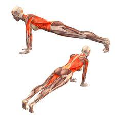 Plank pose - Dandasana - Yoga Poses | YOGA.com