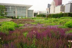 lurie-garden-09 Piet Oudolf THE master.