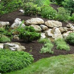 Low maintenance hillside plants | Landscaping a slope ...