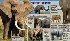 "PROTECT ALL WILDLIFE on Twitter: ""#FridayFacts 30 Amazing Elephant ..."