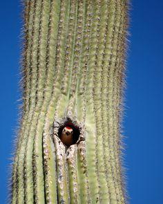 Home of Weird Pictures, Strange Facts, Bizarre News and Odd Stuff Desert Pictures, Weird Pictures, Desert Cactus, Desert Plants, Cactus Types, Cactus Plants, Animals Beautiful, Cute Animals, Mosaic Garden Art