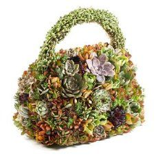 adorable green bag from little plants